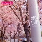 It's Spring (Single) | Download nhạc